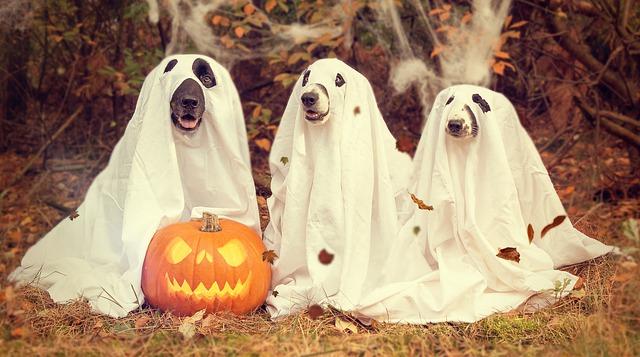 halloween-2870607_640
